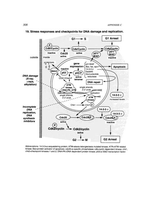 Appendix C Signaling Pathways | Scientific Frontiers in