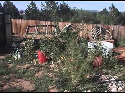 backyard farming in colorado springs co