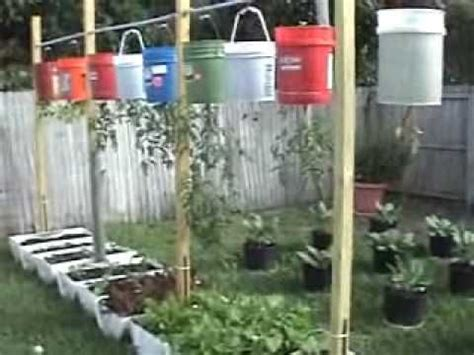container vegetable gardening florida 25 best ideas about plastic drums on feed