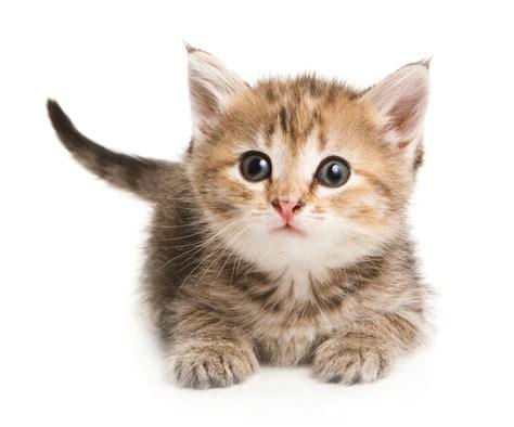 imagenes increibles de gatos gatos recomendaciones humor curiosidades cuidados y m 225 s