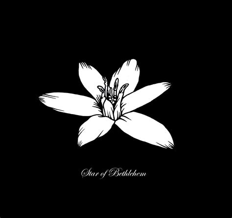 fiori di bach of bethlehem of bethlehem the bach flowers