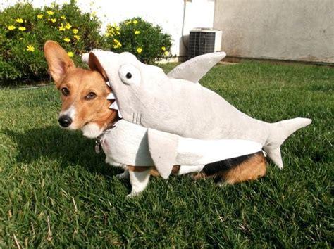 shark puppy shark 1funny