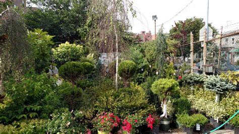 Bay Ridge Gardens by A Guide To Gardening In Bay Ridge Hey Ridge