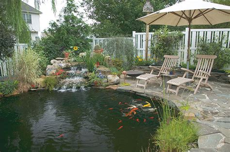 il giardino phili roma pesci da laghetto giardino