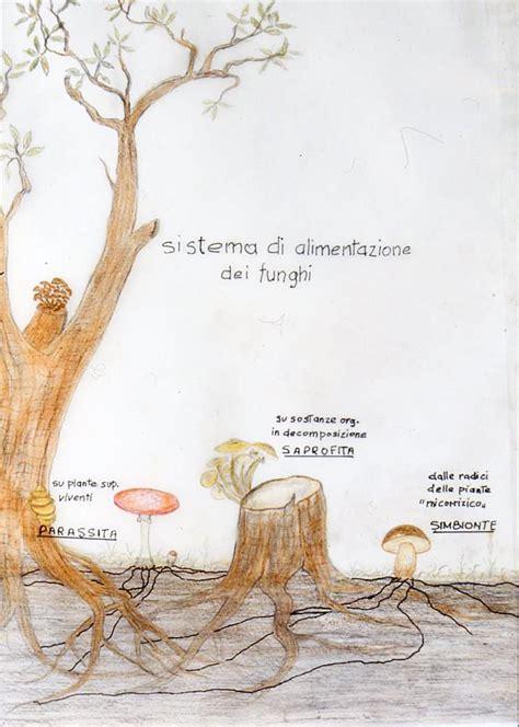 funghi bambini alimentazione come si nutrono i funghi