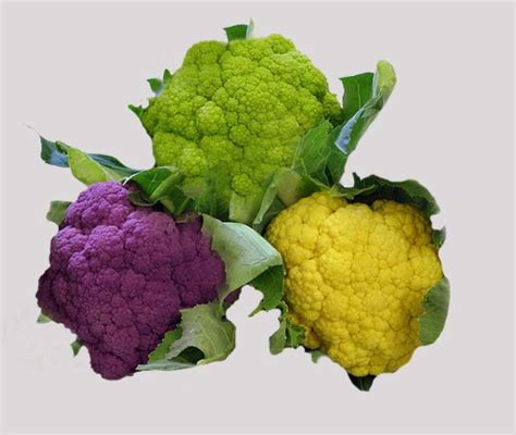 colored cauliflower other products eu vegetable colored coliflower
