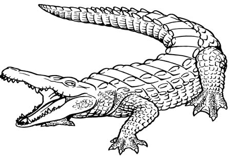 Coloring Page Alligator by Crocodile Coloring Pages Coloringsuite