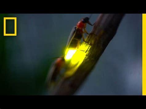 download mp3 ed sheeran firefly elitevevo mp3 download