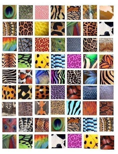 leopard pattern name animal insect skin textures patterns clip art collage