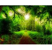 Natural Forest Road Trees Green Grass Hd
