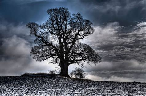 winter tree picture of the day winter tree 171 twistedsifter