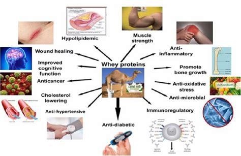 protein health benefits casein protein casein vs whey health benefits casein