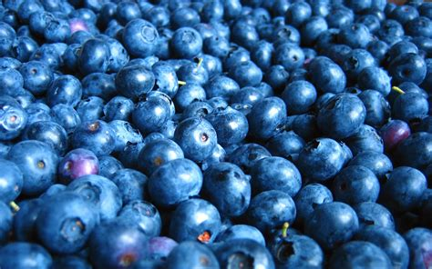 Blueberry Wallpaper | 92 blueberry hd wallpapers backgrounds wallpaper abyss