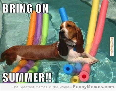 Funny Summer Memes - funny memes bring on summer summer can t wait