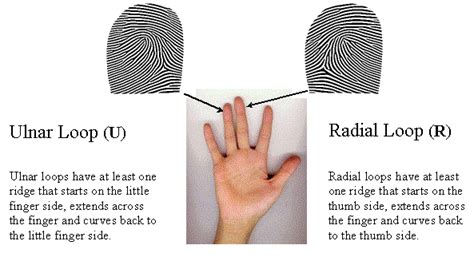 pattern rights definition paper 5 an overview of the science of fingerprints anil