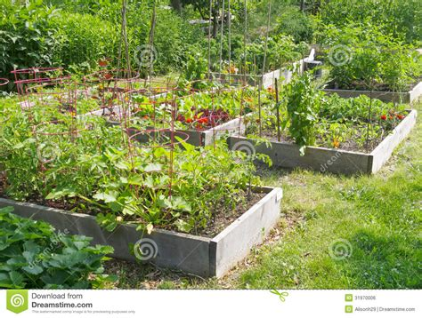 Community Garden Royalty Free Stock Image Image 31970006 Community Vegetable Gardens