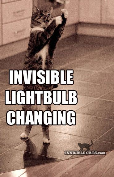 Invisible Cat Meme - 88 best invisible cats images on pinterest