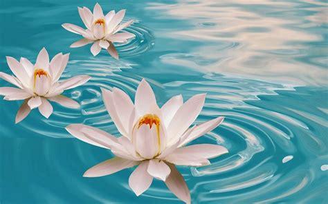 imagenes de flores bonitas para facebook imagenes para facebook de flores fotos bonitas de amor