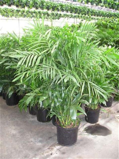 Cairan Pembersih Toluene 5 jenis tanaman hias terbaik untuk membersihkan udara di