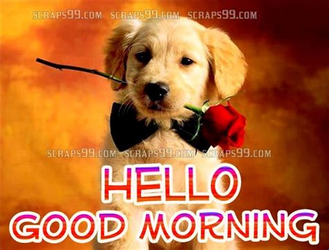 morning puppy morning wishes with dogs pictures images page 8
