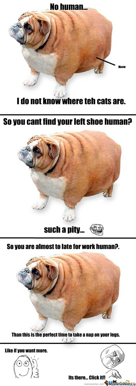 Fat Dog Meme - epic fat dog by yo mama meme center