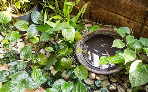 eliminare zanzare giardino 4 consigli su come eliminare zanzare e vespe dalla zona