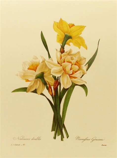 beginner s guide to botanical flower painting books botanical illustration daffodil flower print country