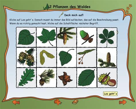 Welche Pilze Wachsen Im Garten Auf Der Wiese by Sachkunde 3 Klasse