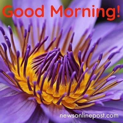 good morning image good morning image flower good