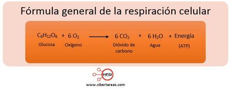 imagenes de jordan y la formula respiraci 243 n celular biolog 237 a 1 cibertareas