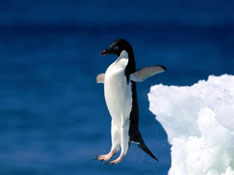 the first man penguin b00gedd3z6 step out with faith have a magnificent day