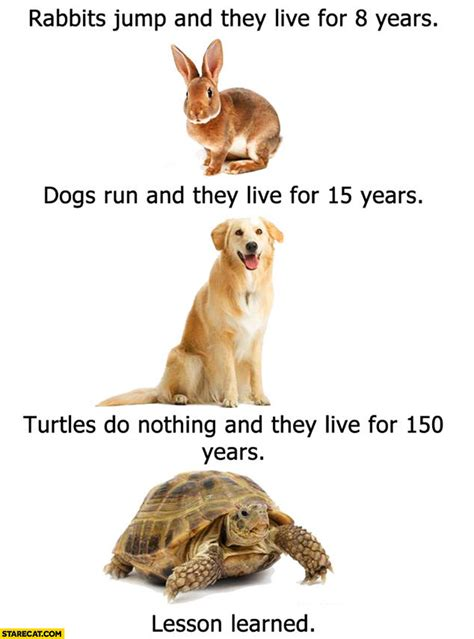 dogs that live the turtle jokes humor images
