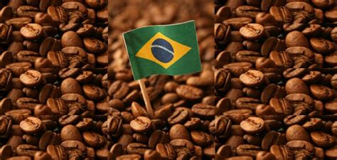 cafe si o no industrializa 231 227 o em n 237 vel global a industrializa 231 227 o