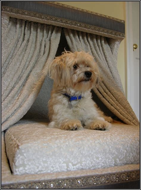 beds for small dogs luxury beds for small dogs page best home design galleries your home