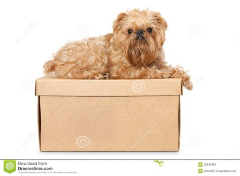 puppy on on cardboard box stock photos image 26649383