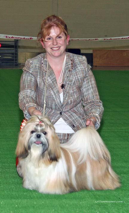 shih tzu bladder infection utility 4 was the shih tzu b howard s rossvale miss insolence at tameron