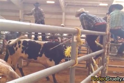 Gloucester County Records Animal Rights Records Alleged Abuse At Gloucester County Rodeo Phillyvoice