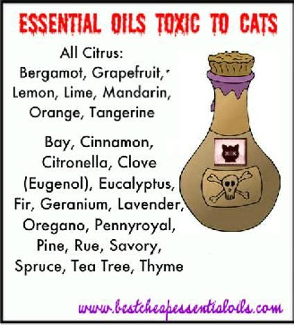 essential oils  cats fat tabby  friends premium
