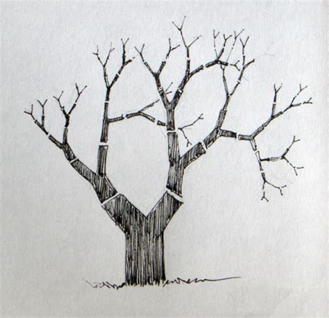 Drawing Trees by Drawing A Tree To Draw