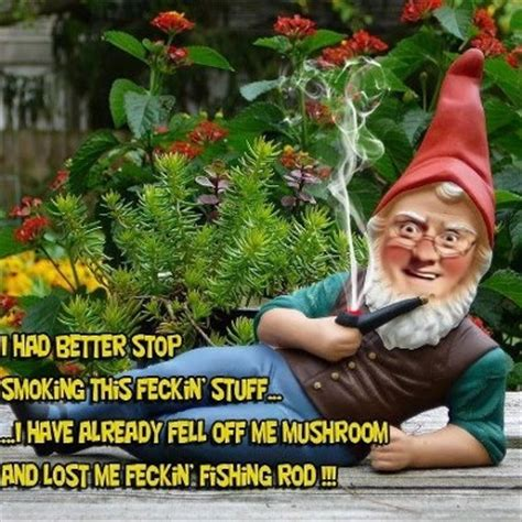 images  gnome memes funny gnomes