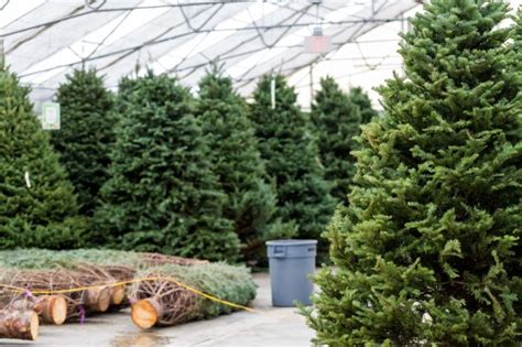 holiday hacks to keep your real christmas tree fresh all