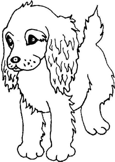coloring pages puppies boykin spaniel puppy coloring page free puppies coloring