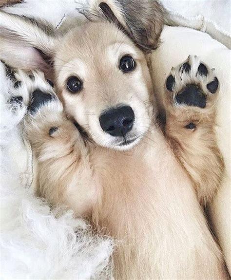 images  puppy  pinterest doggies bulldog