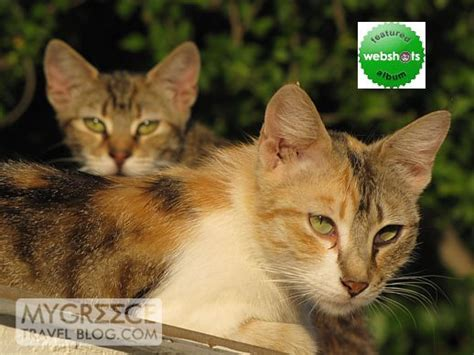 webshots cats webshots cats new style for 2016 2017
