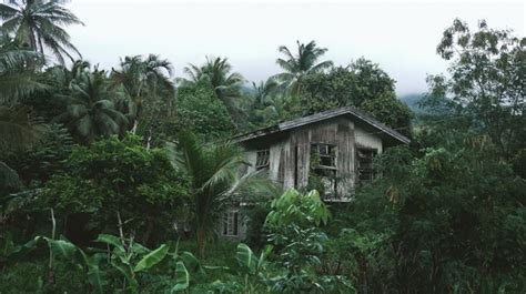 wooden house in the jungle photo free