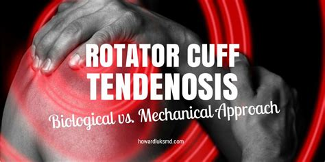 Lu Rotator shoulder at and the rotator cuff