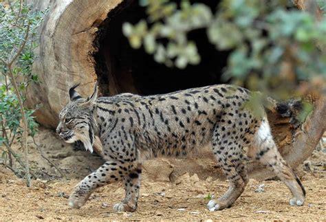imagenes de animales endemicos 191 qu 233 es una especie end 233 mica curiosoando