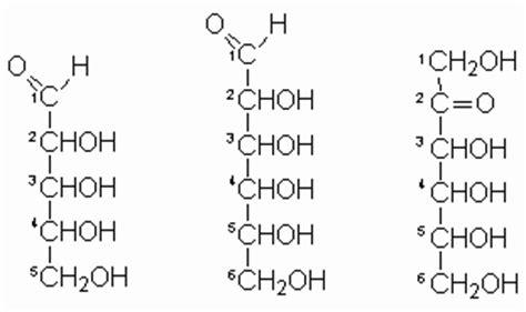 lipidos cadenas abiertas biologia biomoleculas carbohidratos lipidos y proteinas