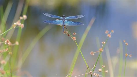 dragonfly desktop app dragonfly wallpapers wallpaper cave