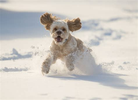 dogs in snow winter tips hip and joint support for your pet